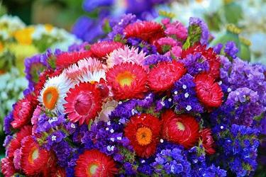 Flores y bouquets disponibles en Bloom Nation