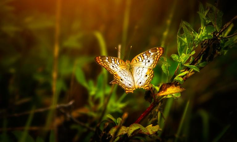 ¿Sabes qué es el efecto mariposa?