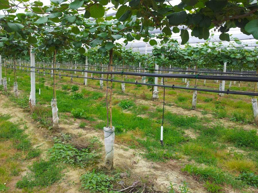 Tubi Per Irrigazione Agricola Utilizzo Prodotti Tecnoresine