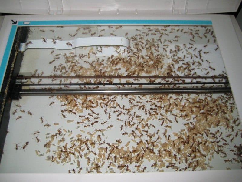 Impressora não funciona impressora não funciona? podem ser formigas e sujeira