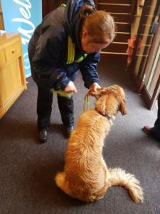 Teddy receiving a rub-down using a microfibre cloth, just inside the door of the church