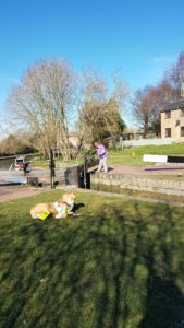 Teddy lying on grass in sunshine, with the shadow of a leafless tree casting across to the foreground. He is watching Ma winding the paddle on the lock gate on the other side of the lock