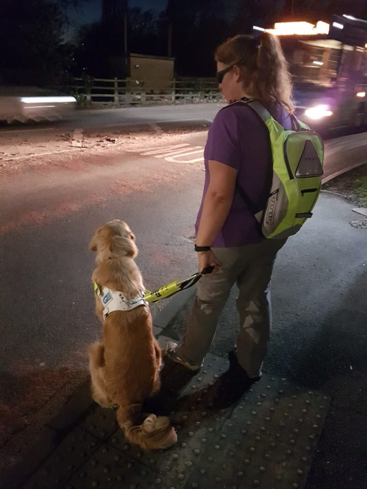 photo taken from behind shows Teddy in harness sitting at a kerb with Ma beside him wearing a hi-viz backpack. It is dark and there is a bus approaching with bright headlights on