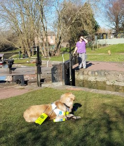 Ma is on the far side of a lock, by the paddle gear, standing and using her hand to shield her eyes from the bright sunlight. She is looking at Teddy who is looking at her from his Down Stay position on the grass