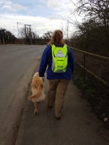 Viewed from behind; Teddy and Ma striding along the pawment with the road to their left and a fence and scrubby bushes to their right. Teddy's tail is wagging in the wind. Ma is wearign her hi-viz yellow rucksack