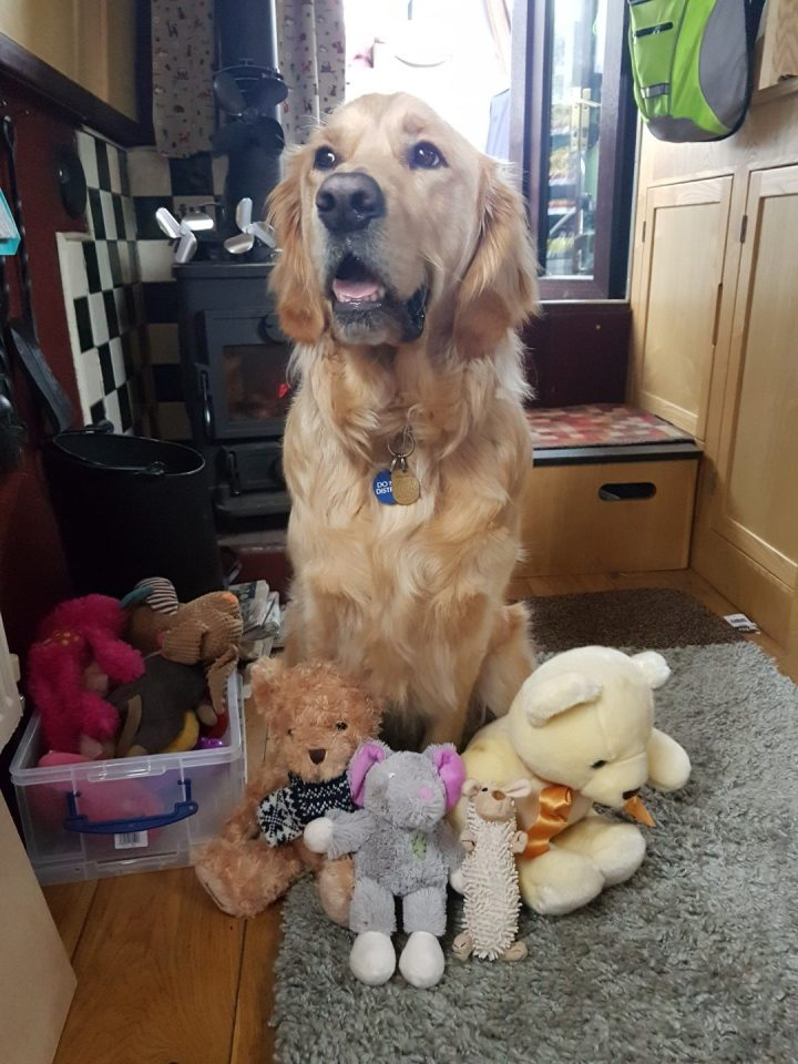 Teddy sitting looking proud, with his head held high, mouth slightly open in a 'smile' with his new toys around him