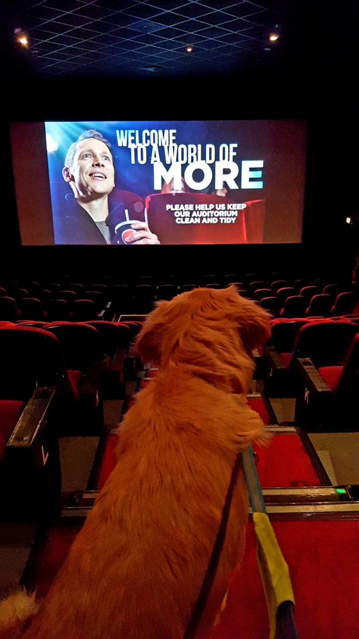 Teddy sat upright on the steps at the top of the cinema, watching the big screen