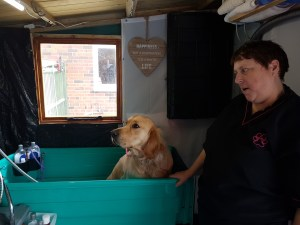 Teddy sitting in a pale blue rectangular dog bath with groomer Jane looking at him. He is not looking impressed!