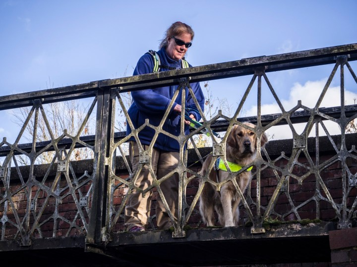 Teddy peering down through the railings of a bridge over the canal. He is no harness with Ma on the daft end of it