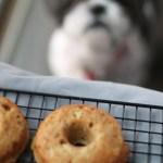 Grain Free Doggie Doughnuts