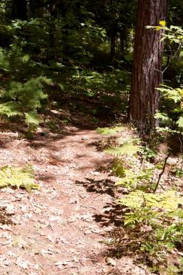 Walloon Lake Beachfront Trail