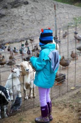 Aly immediately found friends among the goats