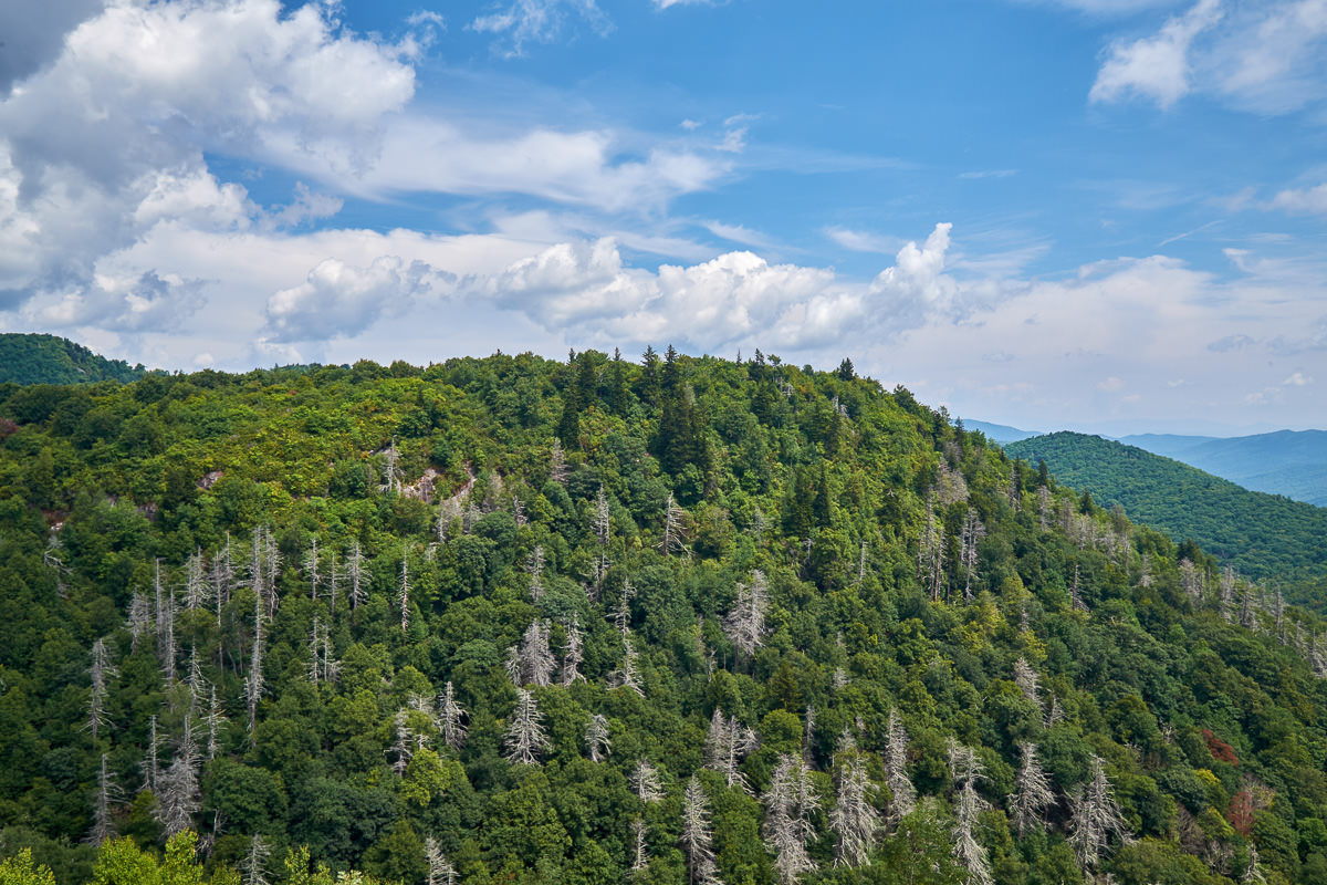East Fork Overlook, Blue Ridge Parkway