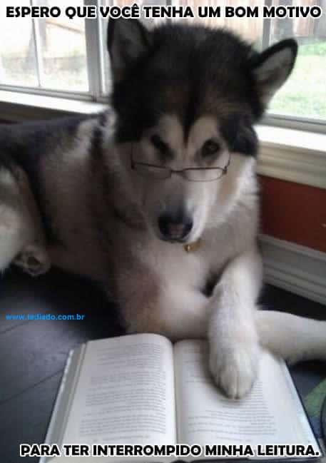 Atrapalhando a leitura do cão 1