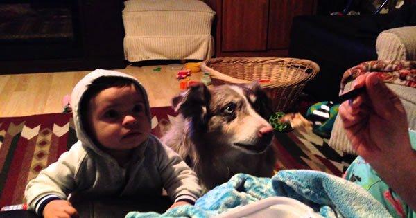 Mãe tenta ensinar filho a falar e tem uma grande surpresa 3