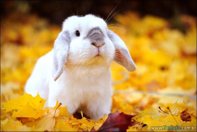 37 animais que aprecia o Outono Mágico 8