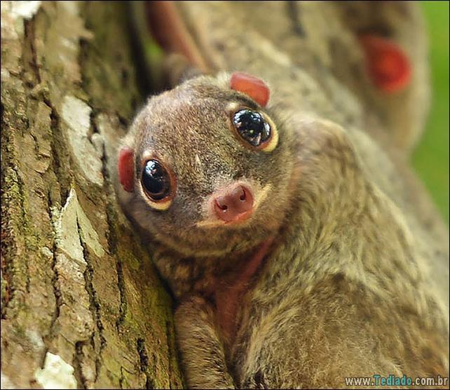 51 filhotes de animais mais bonitos de todos os tempos 4