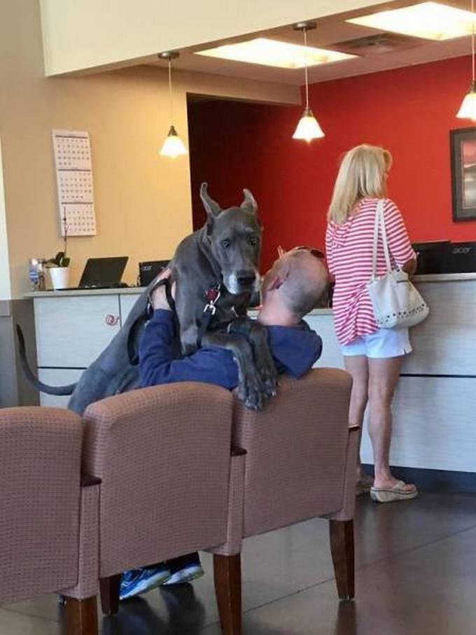 Cachorros realmente não gosta de ir ao veterinário (35 fotos) 3