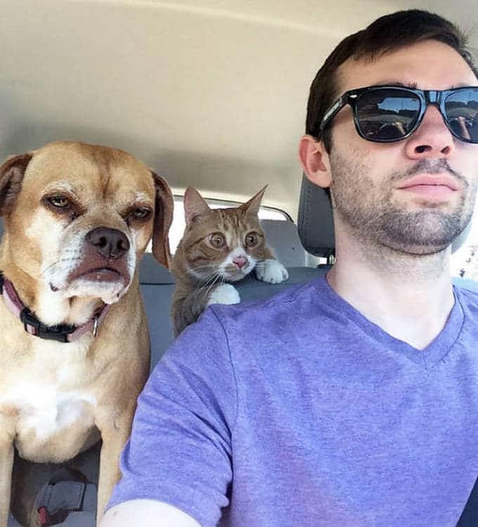 Cachorros realmente não gosta de ir ao veterinário (35 fotos) 4