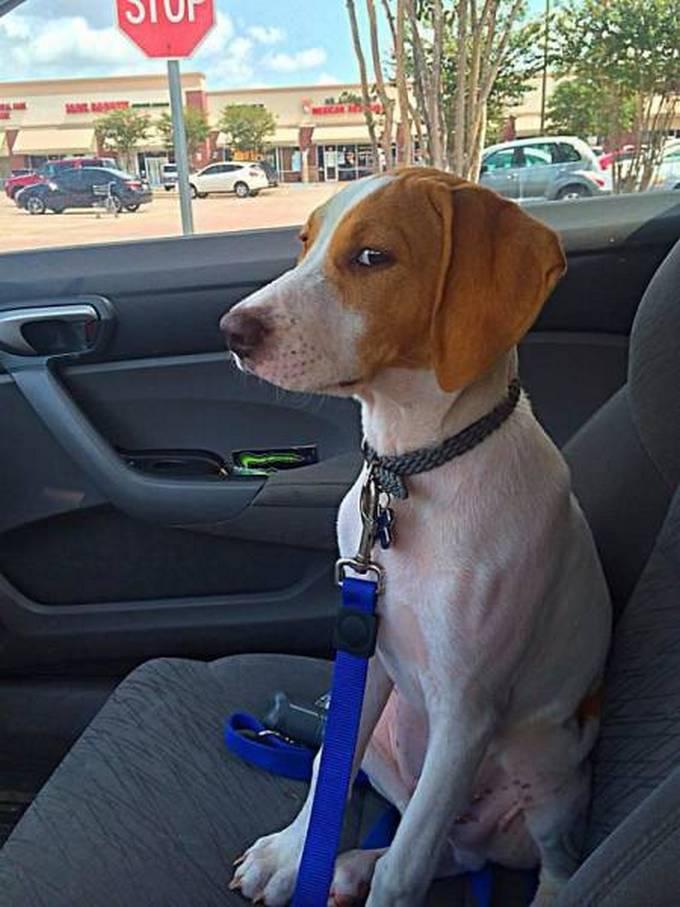 Cachorros realmente não gosta de ir ao veterinário (35 fotos) 9