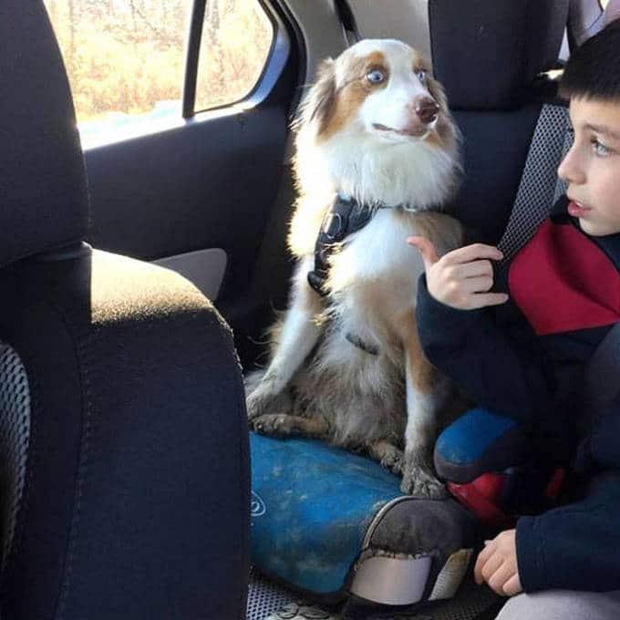 Cachorros realmente não gosta de ir ao veterinário (35 fotos) 11