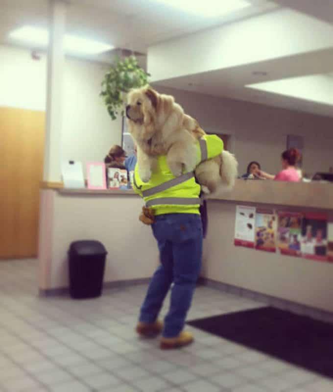 Cachorros realmente não gosta de ir ao veterinário (35 fotos) 12