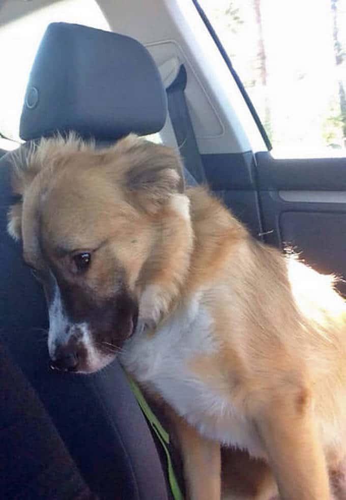 Cachorros realmente não gosta de ir ao veterinário (35 fotos) 14
