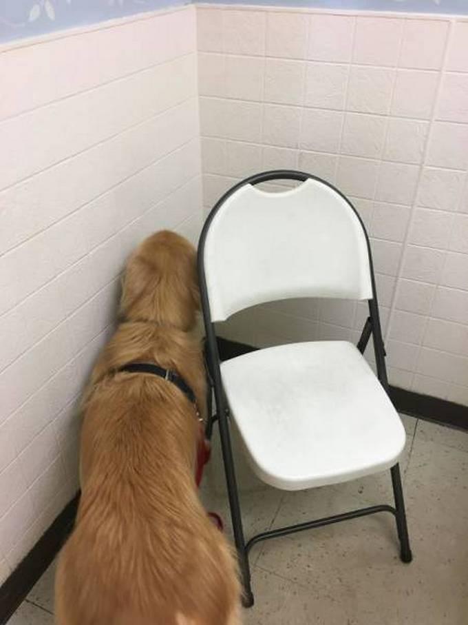 Cachorros realmente não gosta de ir ao veterinário (35 fotos) 15