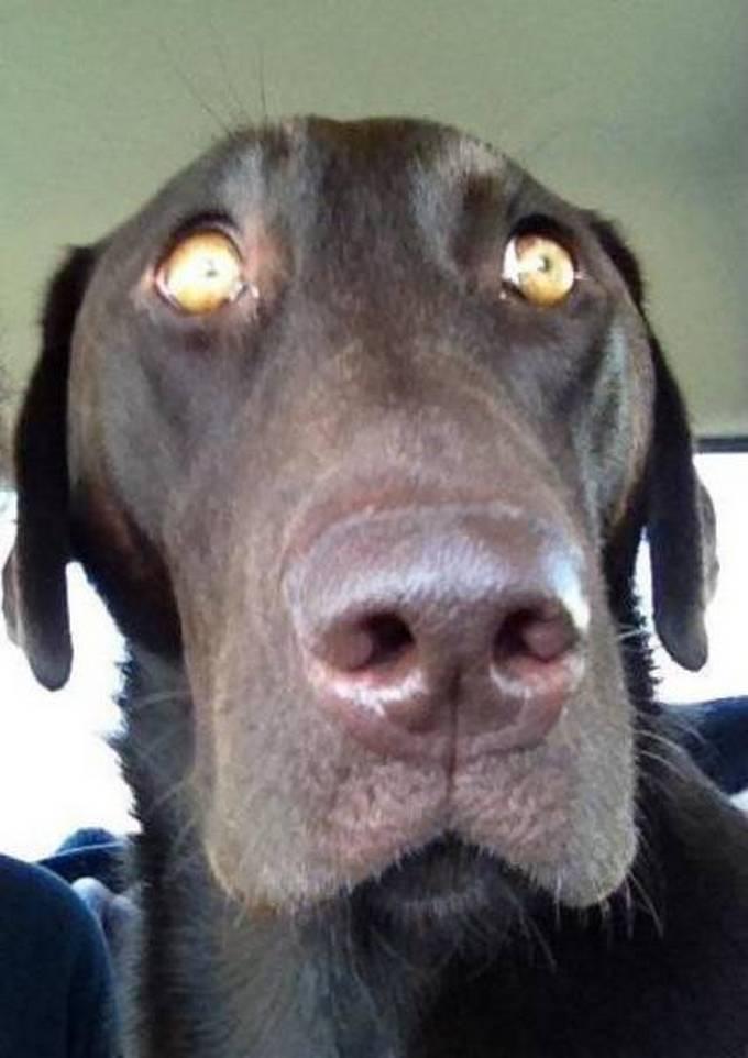 Cachorros realmente não gosta de ir ao veterinário (35 fotos) 22