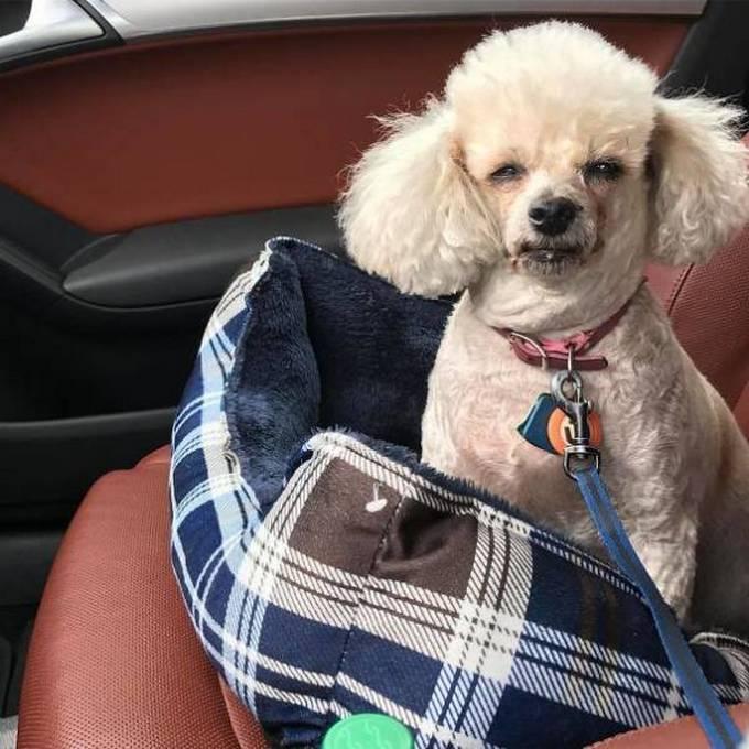 Cachorros realmente não gosta de ir ao veterinário (35 fotos) 24