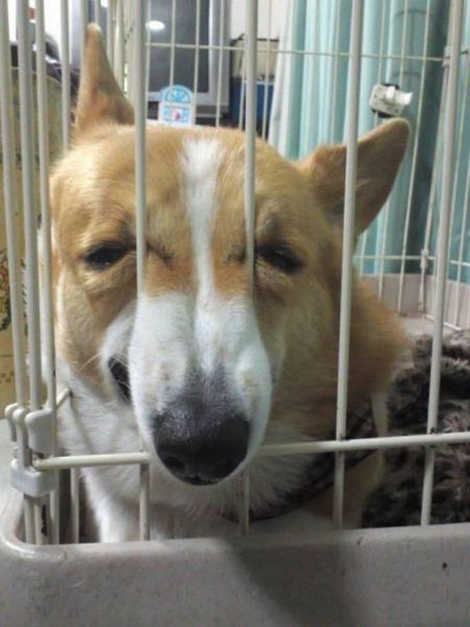 Cachorros realmente não gosta de ir ao veterinário (35 fotos) 27
