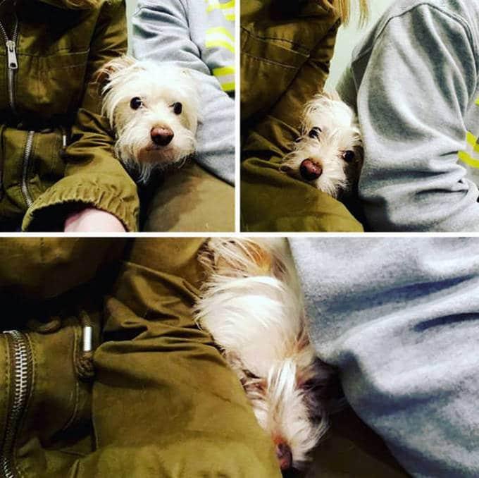 Cachorros realmente não gosta de ir ao veterinário (35 fotos) 29
