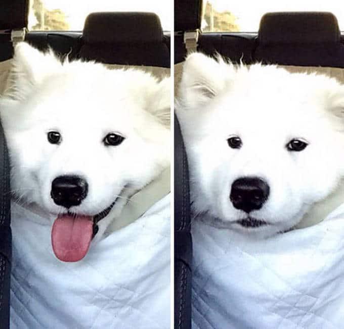 Cachorros realmente não gosta de ir ao veterinário (35 fotos) 35