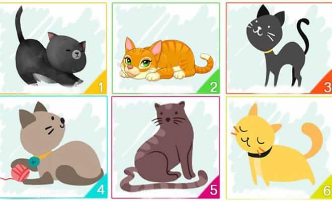Escolha um gato e descubra informações importantes sobre sua personalidade 2