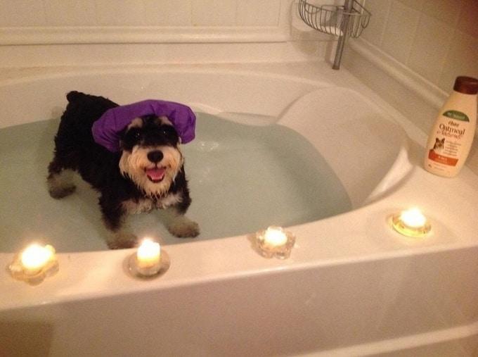 Todo mundo já ouviu falar que os cães são o melhor amigo do homem (20 fotos) 7