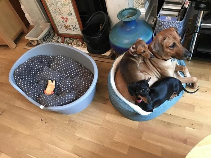 Todo mundo já ouviu falar que os cães são o melhor amigo do homem (20 fotos) 13