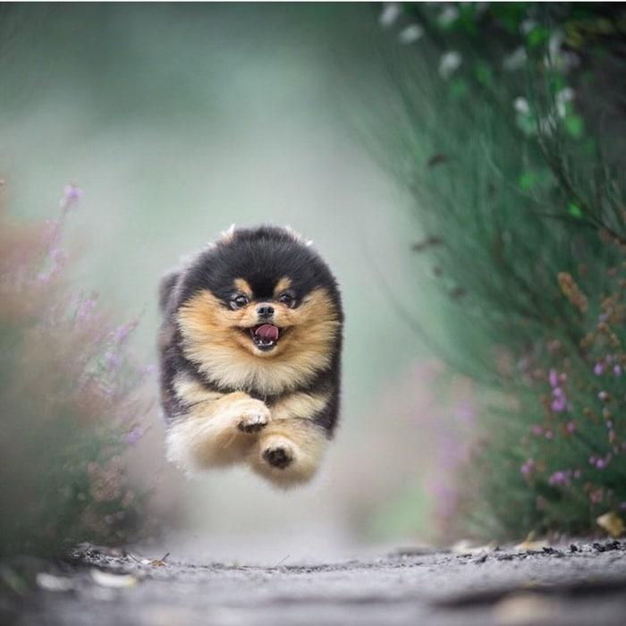 21 animais que simplesmente não conseguem esconder suas emoções 4