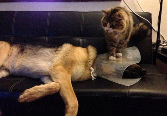 22 fotos provando que os gatos são os verdadeiros donos da casa 2