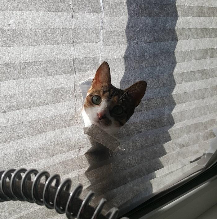22 fotos provando que os gatos são os verdadeiros donos da casa 3