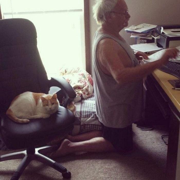 22 fotos provando que os gatos são os verdadeiros donos da casa 8