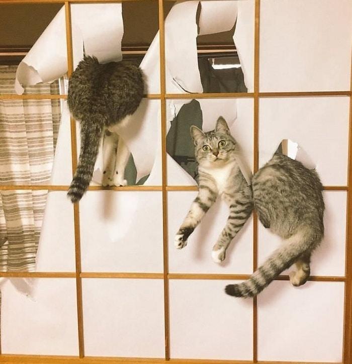 22 fotos provando que os gatos são os verdadeiros donos da casa 11