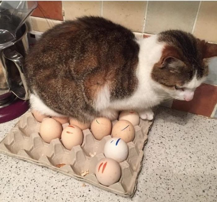 22 fotos provando que os gatos são os verdadeiros donos da casa 15