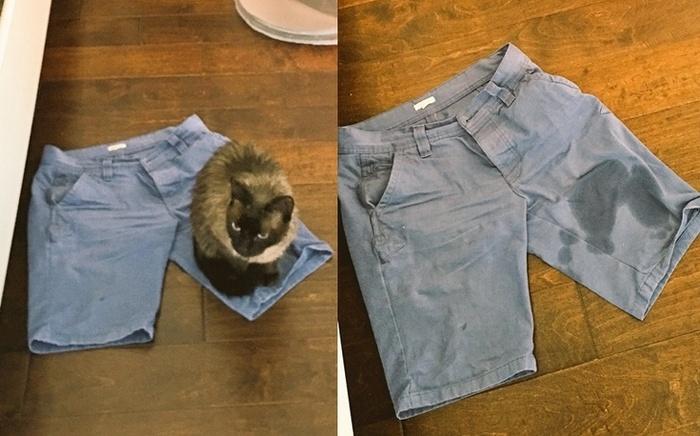 22 fotos provando que os gatos são os verdadeiros donos da casa 17