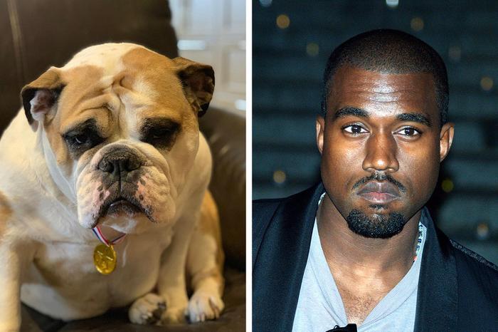 18 animais que se parecem exatamente com algumas celebridades 11