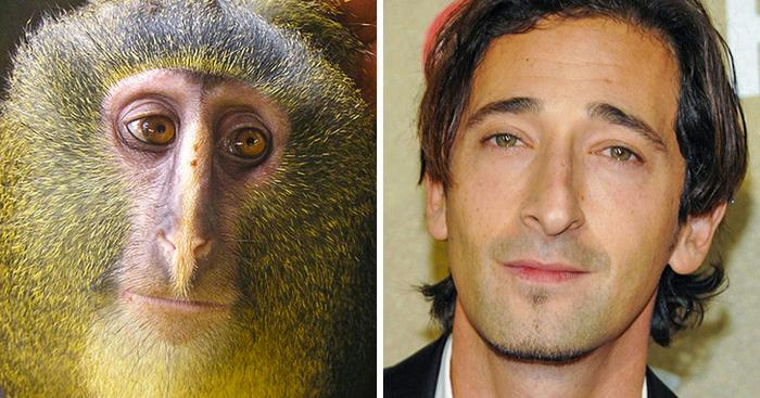 18 animais que se parecem exatamente com algumas celebridades 17