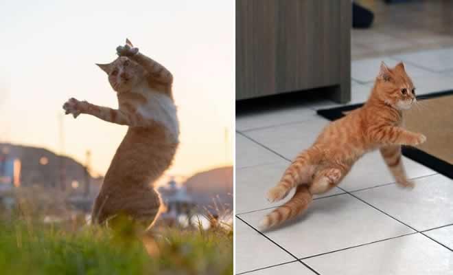 36 das mais divertidas fotos de gatos dançando 2