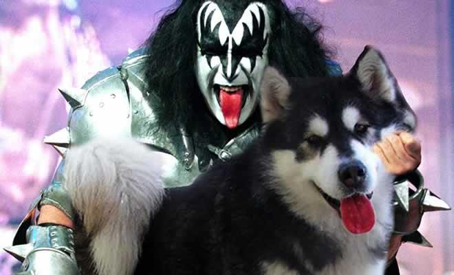 20 guitarras substituídas por cachorros 7