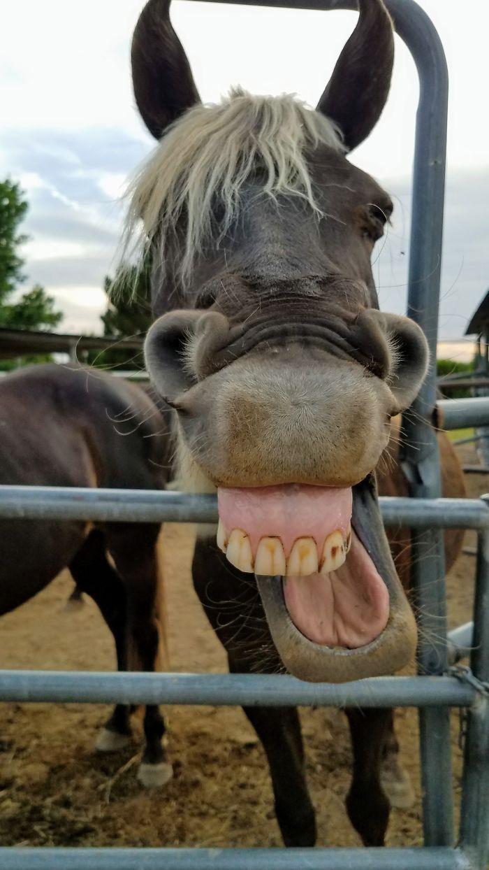 25 fotos de animais de estimação de um jeito único e hilário 4