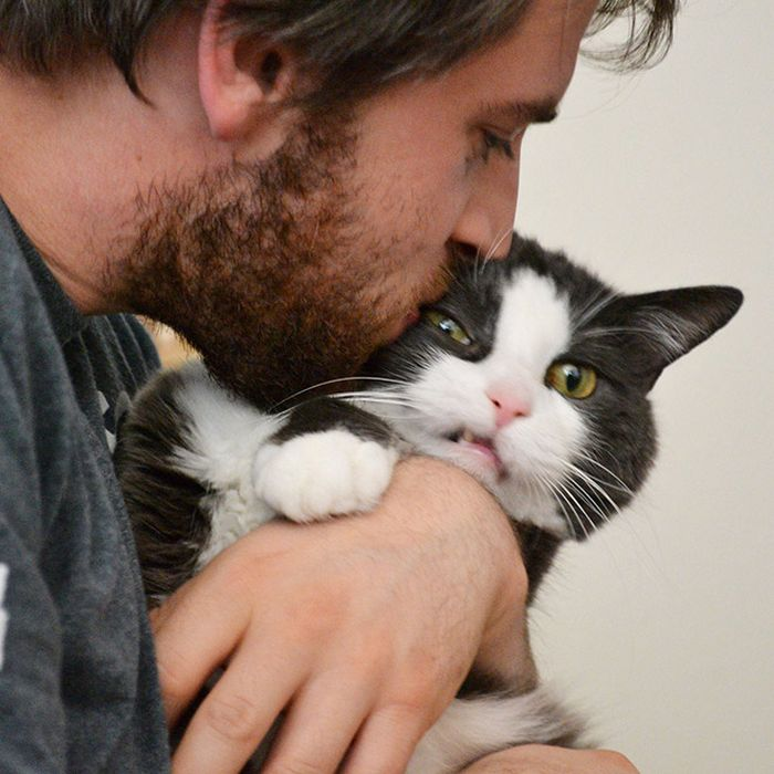 22 gatos odeiam abraços 2
