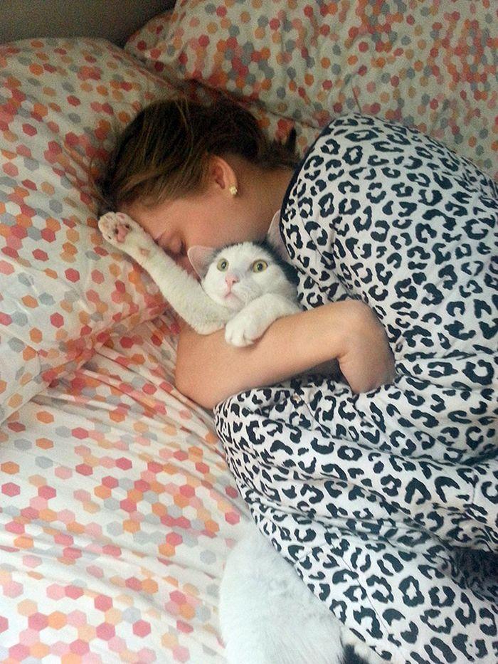 22 gatos odeiam abraços 13